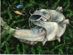 Texas State-Fish Art Contest announces 2015 winners