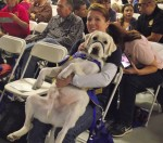 Canines serving as big-hearted companions