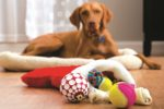 U.S. pet toys market tops $1 billion